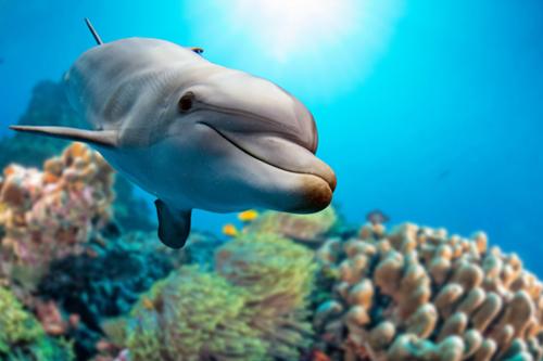 dolphin-teeth